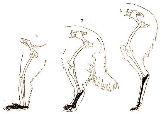 Milyen sajátos jellemzői vannak az emlősöknek
